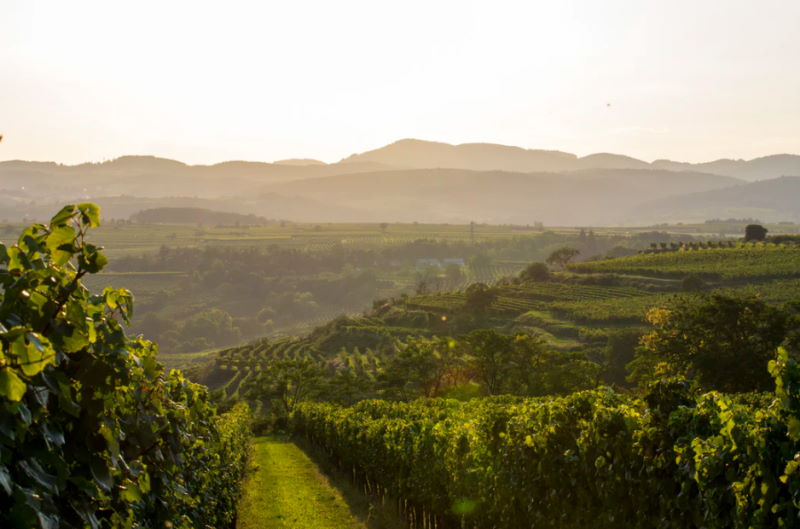 Weinreise Österreich